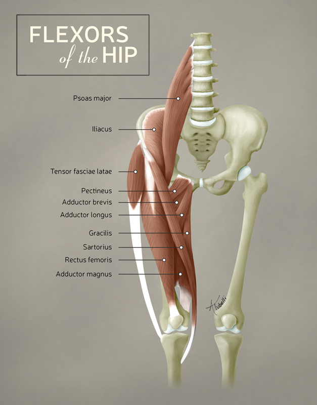 Flexors of the Hip | Andrew Tubelli